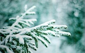 Wallpaper bokeh, snow, tree, winter, nature, branches