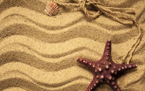 Picture sand, shell, starfish, beach, texture, sand, marine, starfish