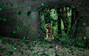Picture leaves, tiger, wall, hole