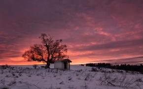 Wallpaper snow, winter, tree, Bulgaria, Plan, mountain Plan, St. Cyprian chapel, sunrise, clouds
