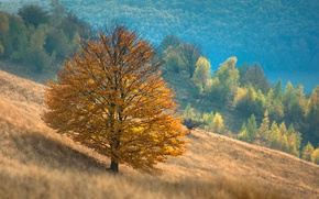 Picture autumn, mountains, tree, slope