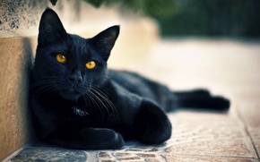 Picture cat, eyes, cat, black, street, looks, Kota