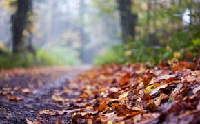 Picture road, autumn, leaves, macro, background, widescreen, Wallpaper, blur, wallpaper, leaves, widescreen, background, autumn, leaves, macro, …