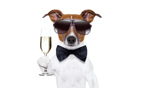 Picture glass, dog, New Year, glasses, champagne, dog, New Year, Happy, champagne