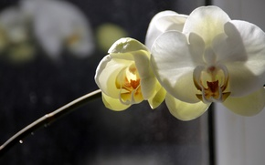 Picture flower, yellow, macro
