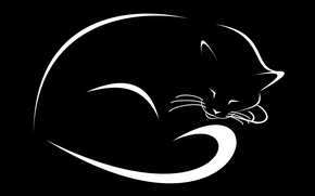 Picture cat, figure, black background