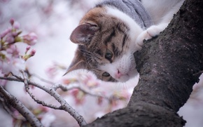 Picture cat, mustache, nature, tree, branch, nose, muzzle