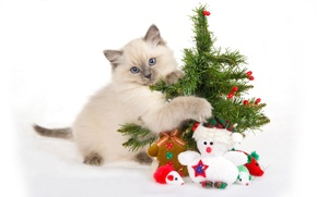 Wallpaper kitty, toys, gifts
