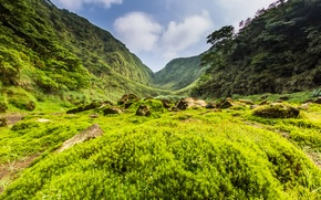 Picture greens, grass, trees, mountains, stones, valley