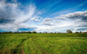 Picture greens, field, the sky, grass, landscape, nature