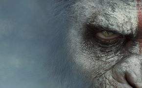 Picture Movie, Dawn Of The Planet Of The Apes, Dawn Of The Planet Of The Apes