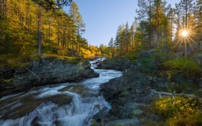Picture autumn, forest, trees, stream, stones, for, Norway, the rays of the sun
