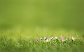 Picture summer, grass, flowers, bokeh