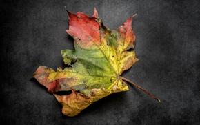 Wallpaper nature, autumn, leaves