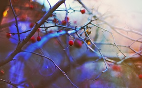 Wallpaper winter, the sun, sunset, berries, mood