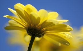 Picture flower, yellow, nature