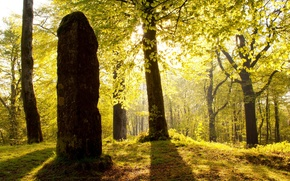 Picture forest, the sun, light, trees, stone, England, post, Somerset, Beacon Hill