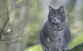 Picture cat, grey, sitting