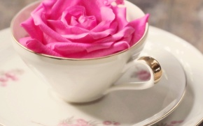 Picture flowers, background, Wallpaper, pink, mood, tenderness, rose, mug, Cup, wallpapers, flower