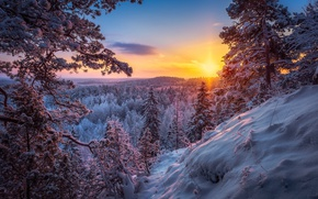 Picture winter, forest, the sun, snow