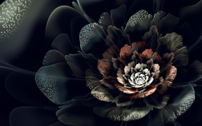 Picture white, flower, red, black, petals