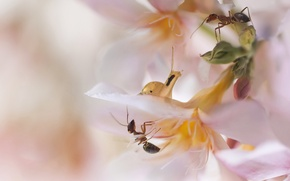 Picture flowers, snail, ants, pale pink