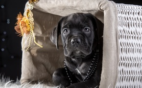 Picture basket, mask, puppy, beads, cane Corso