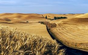 Picture road, field, ears