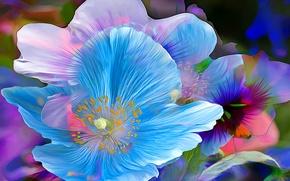 Picture flower, macro, line, paint, petals