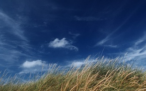 Wallpaper ear, the sky, field