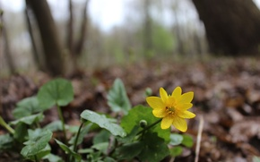 Picture forest, flower, yellow, green, mood