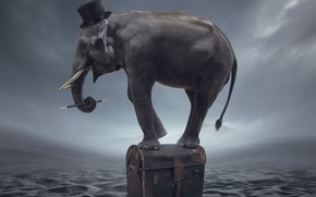 Picture fantasy, elephant, art, Magician
