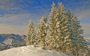 Picture winter, snow, mountains, traces, nature, ate, frost, Nature, trees, winter, mountain, snow, frost, landscape