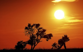 Picture fireball, trees, sunset, sun, silhouettes