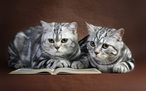 Picture cats, book, a couple