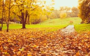 Wallpaper road, autumn, grass, leaves, trees, nature, Park, lawn, yellow, blur, orange
