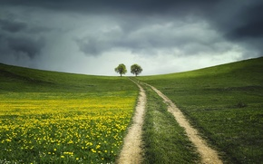 Picture road, field, nature, tree