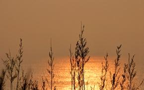 Picture sea, grass, reflection, plant, silhouette, Blik