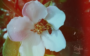 Picture flower, retro, bee, spring
