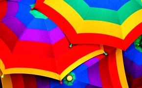 Picture purple, blue, yellow, red, green, colored, color, umbrella, umbrellas