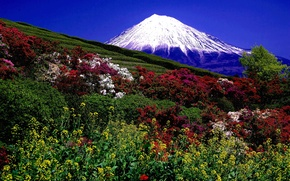 Picture The volcano, Mountains, The bushes, photo, Field, Landscape, Nature