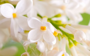 Picture flowers, web, branch, spring, petals, white, lilac