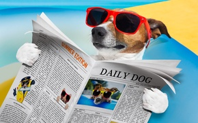 Picture humor, glasses, newspaper, lies, reads, Jack Russell Terrier