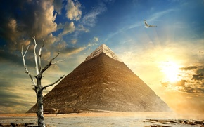 Picture the sky, the sun, clouds, stones, tree, bird, pyramid, Egypt, dry, Cairo