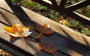 Picture autumn, leaves, sheet, widescreen, Wallpaper, shadows, wallpaper, maple, bench, widescreen, background, the Wallpapers, full screen, …