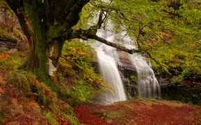 Picture autumn, forest, rocks, waterfall, stream
