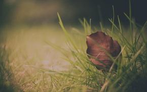 Picture autumn, grass, leaves, foliage, leaf, grass, leaves, leaf, falling leaves, sheets, leaves, leaf wallpapers, autumn …