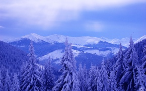 Picture winter, the sky, clouds, snow, trees, landscape, mountains, spruce