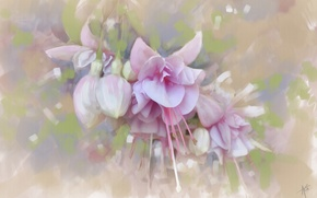 Picture texture, buds, fuchsia