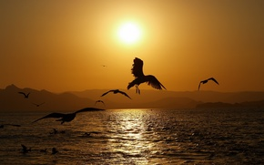 Wallpaper sea, the sun, wave, sunset